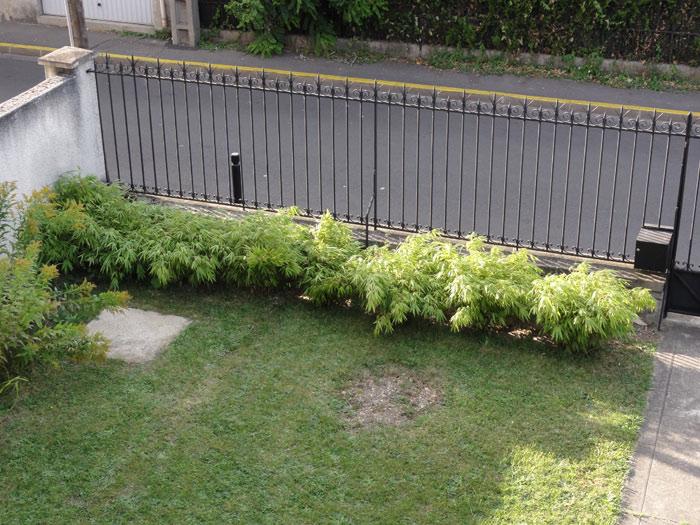 plantation d 39 une haie de fargesia photos aout 2012 forum des fous de bambous. Black Bedroom Furniture Sets. Home Design Ideas