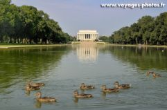 Canards à Washington